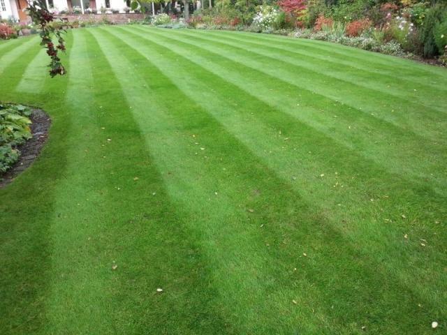 Lawn Cut by LawnQuest