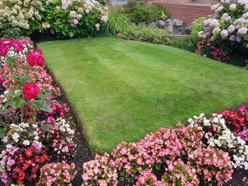 Cut and Treatment applied by LawnQuest