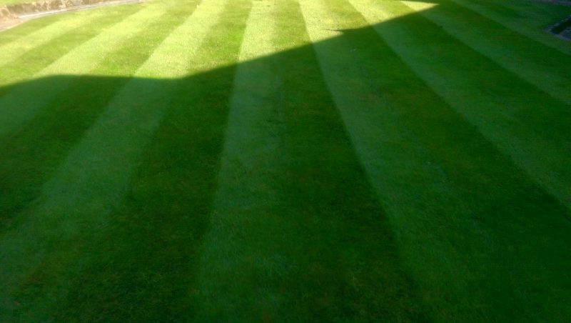 Morning Cut By LawnQuest